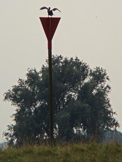 Kribbaken rood